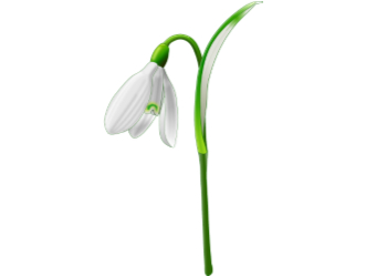 Snow Drop Walk - 10th February 2019